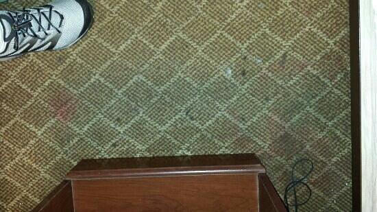 Days Inn Orlando Near Millenia Mall: carpet
