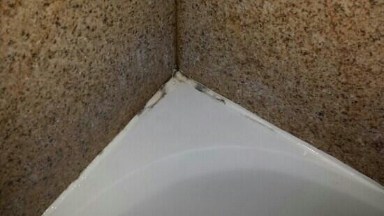 Days Inn Orlando Near Millenia Mall: mold in shower