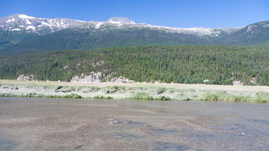 Chilkoot Trail Outpost: Plenty of salmon at the tidal flats in Dyea