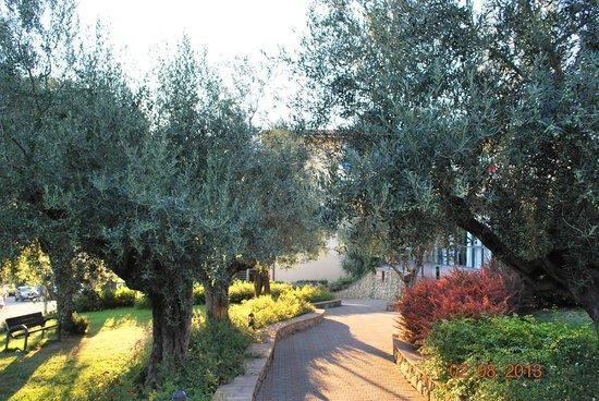 Villa Paradiso Village: Anlage