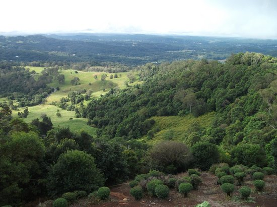 QTour Australia - Day Tours: The view from Montville back to the Coast