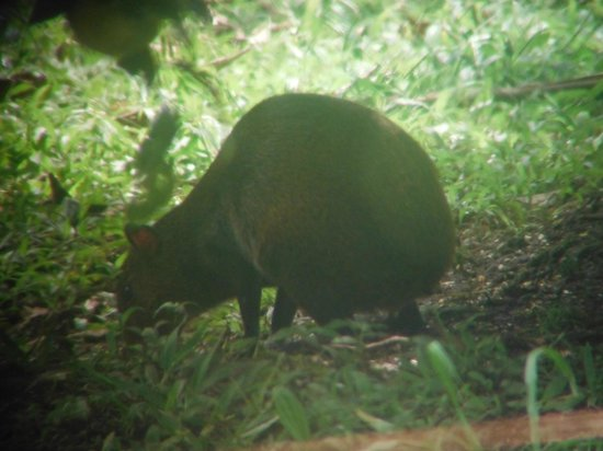 Curi Cancha Reserve : Largest rodent