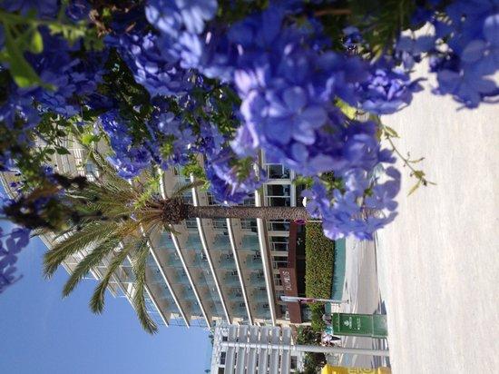 Hotel Calipolis: Summer/Sitges/Calipolis/nice