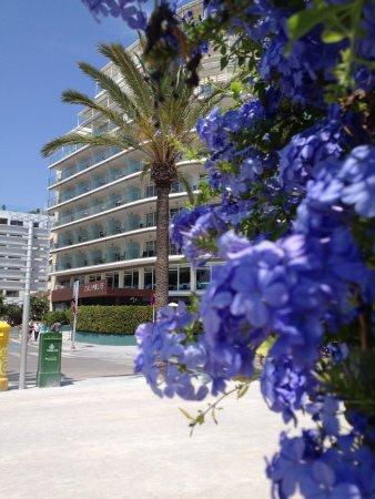 호텔 칼리폴리스 사진