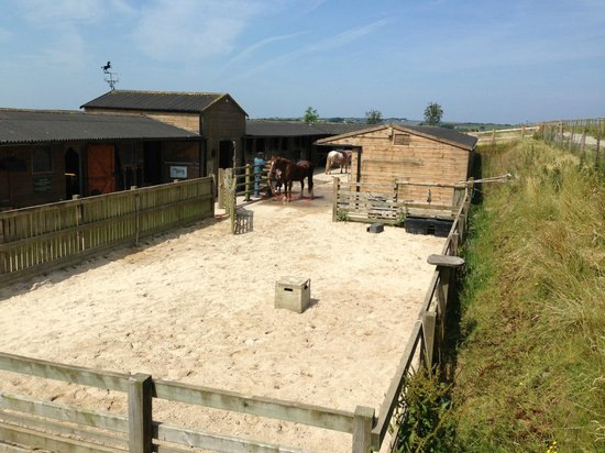 Stowford Farm Meadows: Horseriding centre at Stowford with Dave, brilliant fun