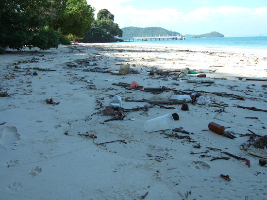 Cape Panwa Hotel: Unacceptable debris on the private beach: most Hotels would clear this away first thing.