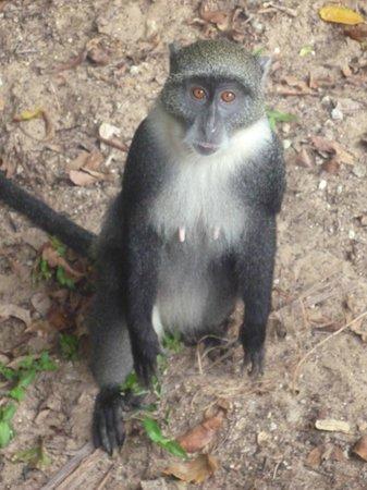 Watamu Beach: spiaggia delle scimmie