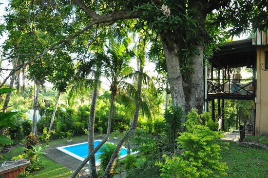 Kontiki Private Hotel : Backyard and the swimming pool
