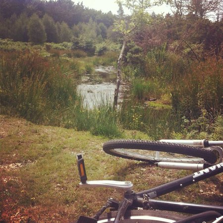 Forest Leisure Cycling: New forest