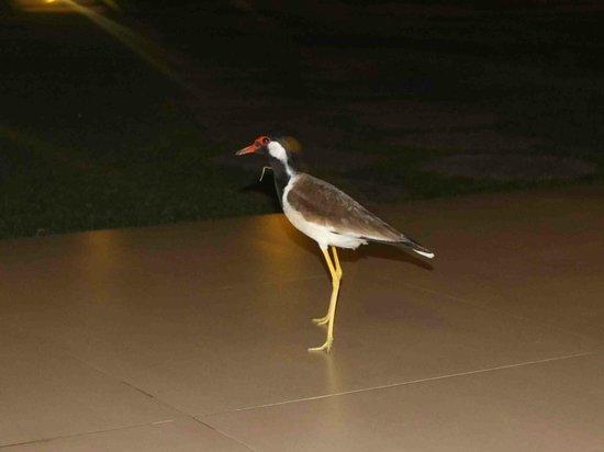 The Gateway Hotel Airport Garden Colombo: night bird