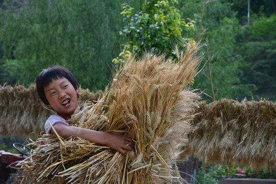 Jiarong Hostel: One of their kids help with carrying wheat