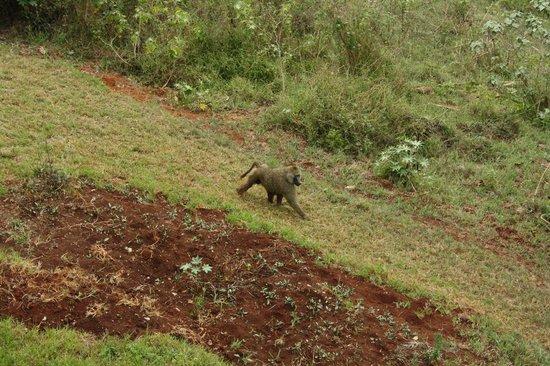 Neptune Ngorongoro Luxury Lodge: veduta