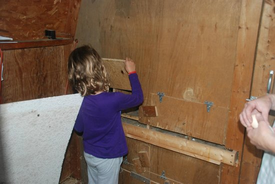 Amanda's Bequest - A Heritage Immersion Bed & Breakfast: checking for eggs in the coop