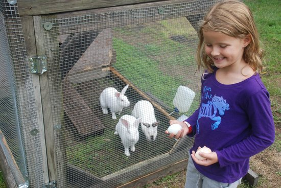 Amanda's Bequest - A Heritage Immersion Bed & Breakfast: bunnies