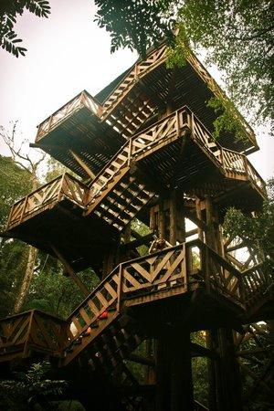 escadaria para a trilha