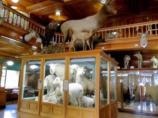 Banff Park Museum: Inside the gallery on the main floor