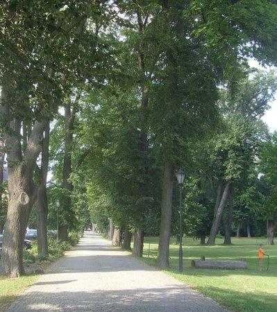 Kliczkow Castle: Droga dojazdowa do zamku