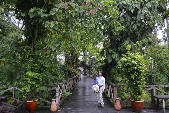 Sukau Rainforest Lodge : Walkway between the river terrace and the lobby