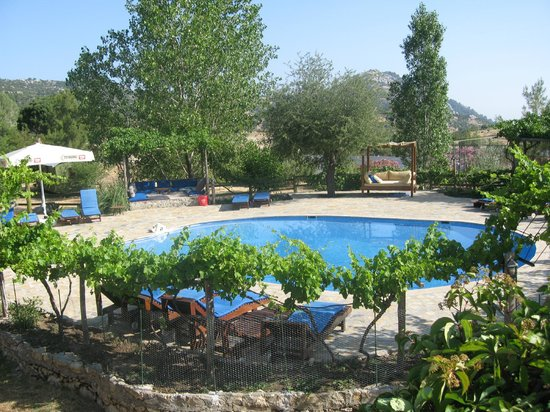 Blacktree Farm and Cottages : Poolside