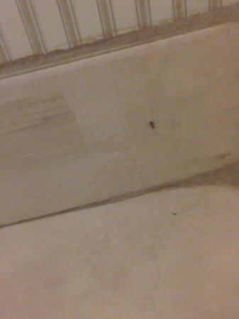 Ramada Portland Airport: spider in bathroom in corner