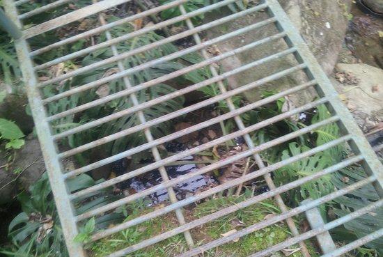 Hotel Rio Perlas Spa, Resort & Casino: VERY nasty sewer