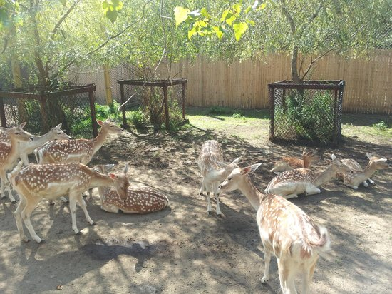 York's Wild Kingdom Zoo and Fun Park: deer area