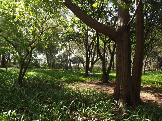 Parque Leopoldina Orlando Villas Boas