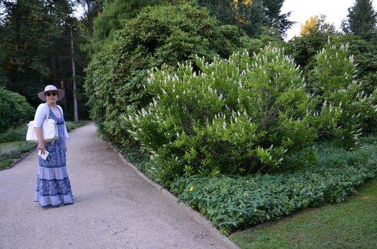 Palais Großer Garten: Walk in the garden.