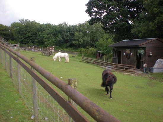 Ponies at Gypsy Wood Park.