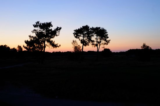 Golf du Medoc Resort: Le parcours au soleil couchant