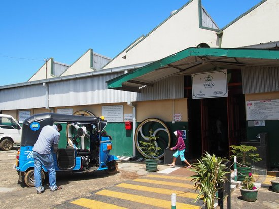 Pedro Tea Factory