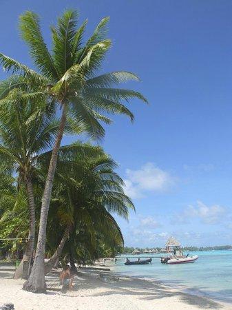 Y AKA Plongee Rangiroa: spiaggetta \ mare fronte diving
