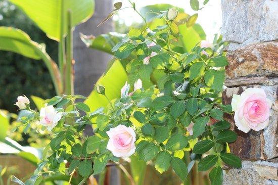 Parfum de Roses : Roses in the garden