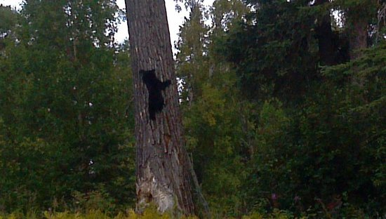 Fisherman's Choice Charters : Black bear cub seen while fishing with Fisherman's Choice!