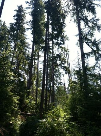 Quinault Rain Forest: beautiful trail