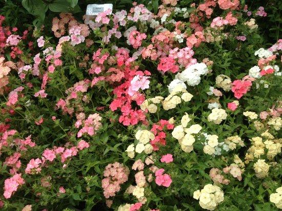 Asticou Terraces / Thuya Garden: Even more ...