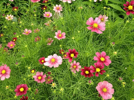 Asticou Terraces / Thuya Garden: These were too ...