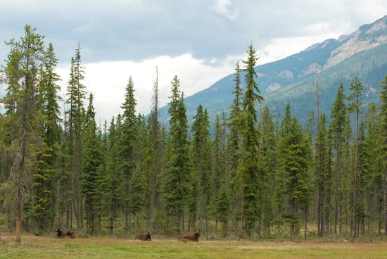 Rocky Mountain Buffalo Ranch & Guest Cottage Buffalo Tours: The accommodation..