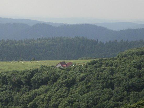 L'Auberge de la Chaume de Schmargult : auberge en pleine nature , non loin du Honneck