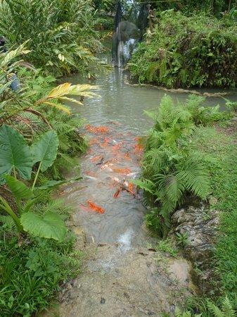 Part of the falls foto di turtle river falls and gardens for Koi pond traduzione