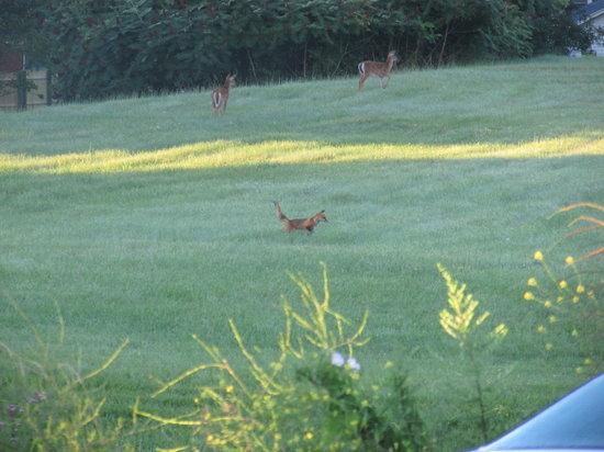 Best Bear Lodge & Campground : lots of deer