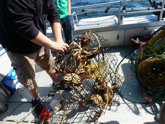Experience One Charters: Bringing in the catch!