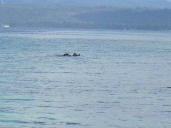 Aore Island Resort: Dugong & Calf