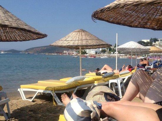 Palm Garden Hotel: Beach