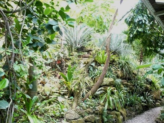 Jardin Botanique de l'université de Strasbourg : Tropical plants