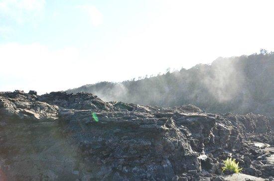 Kilauea Iki Trail: Wanderung durch den Kilauea Krater