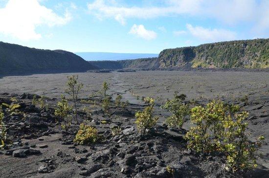 Kilauea Iki Trail: Geschafft-Blick zurück