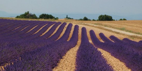 Auberge de Reillanne : Drive to Valensole for the Lavender
