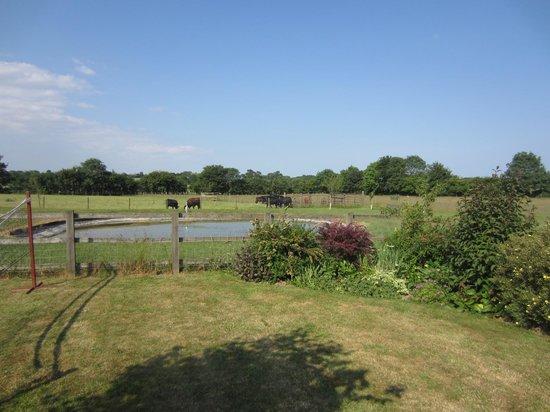 Brocking Farm Cottages: Uitzicht op de koeien