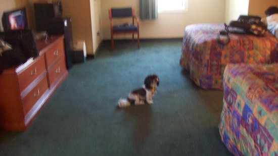 Econo Lodge Inn & Suites : pet friendly and large rooms